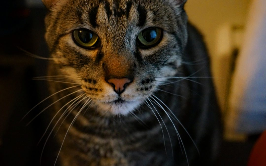 Honouring our Older Animals for National Adopt a Senior Pet Month