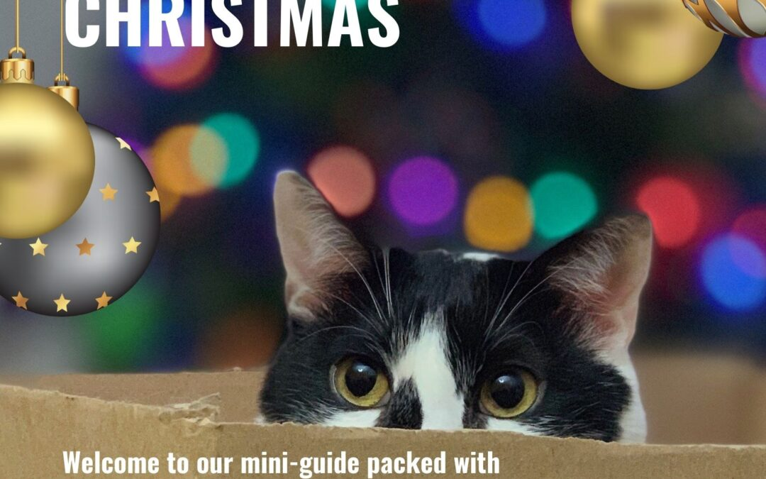 Mini-Guide to Cat Gifts