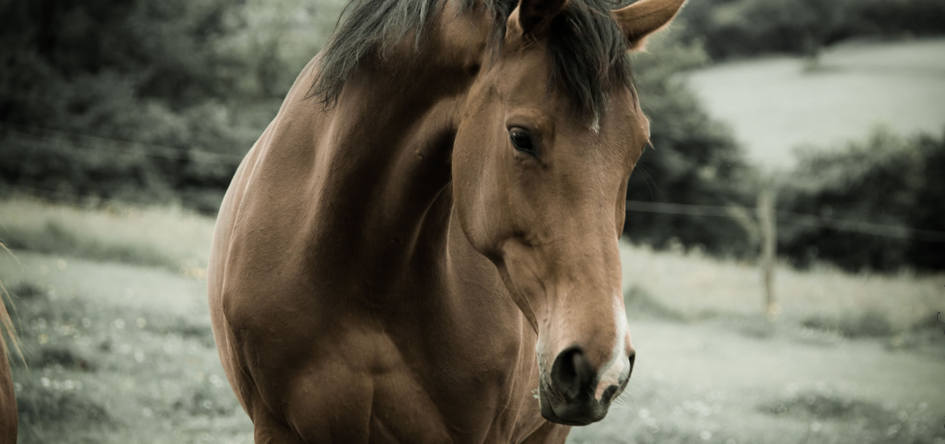 Horses need protecting during winter