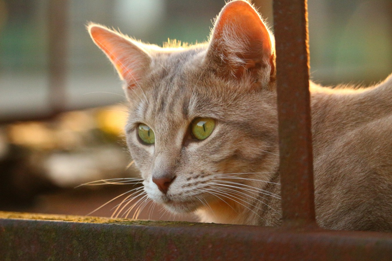 The ageing process can change our feline's sleeping habits