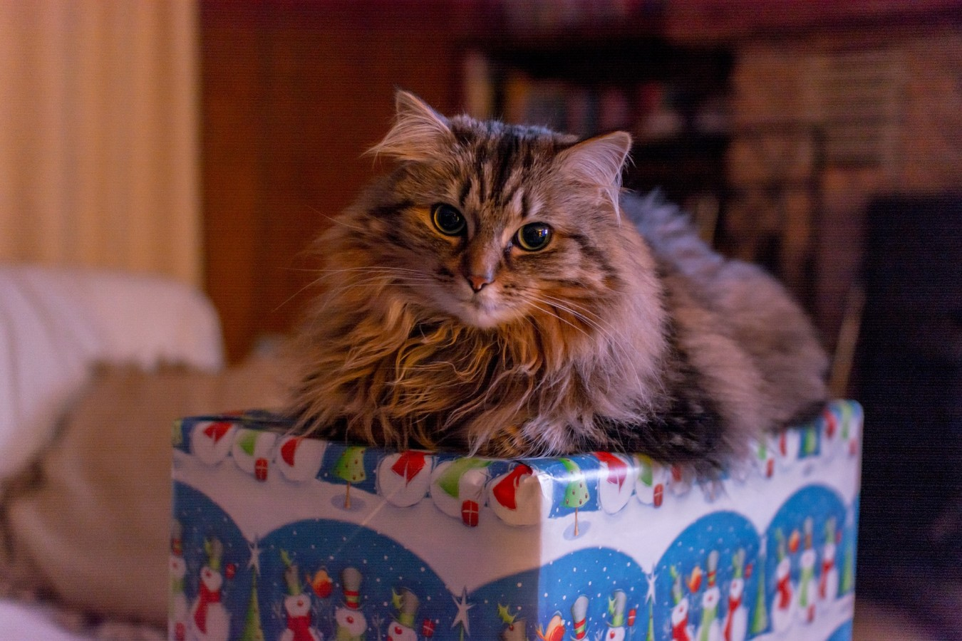 Avoid giving animals as presents