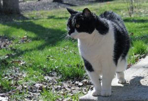 During their twilight years our feline animal friends can also develop dementia