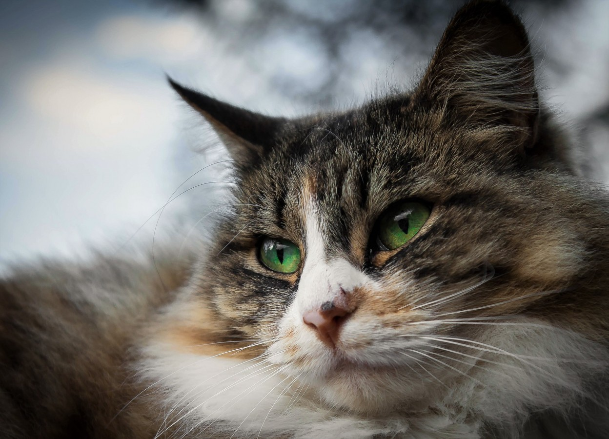 Keeping our feline-friends living well