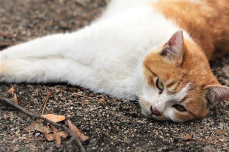 cat-3498523_19202