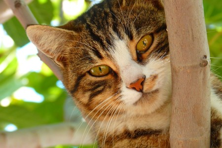 cat-61079