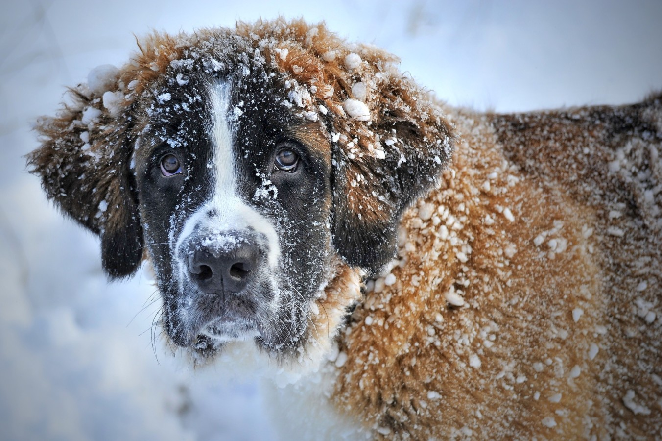 Many animals can suffer during extreme weather conditions