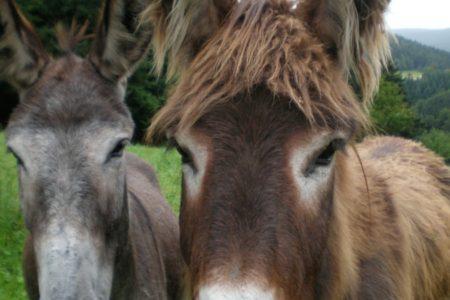 Donkeys are wonderful animals