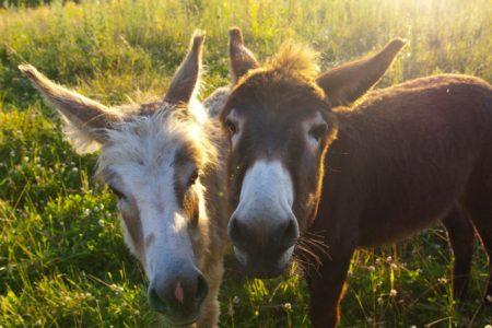 donkey-2404782_1920
