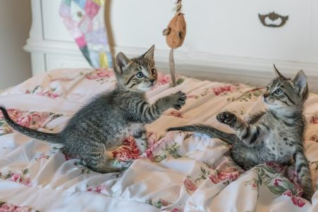 Making your home kitty-friendly