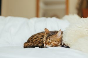 Our feline-friends need their sleep