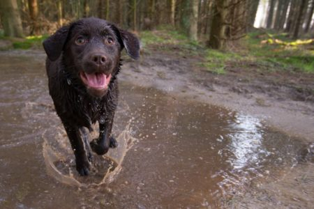 Keeping our canine friends clean and healthy after walkies