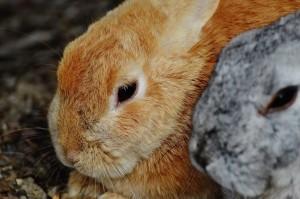 rabbit-1312568_1920