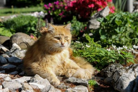 Help keep your garden safe for animals